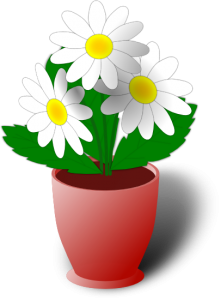 camomile-or-daisies2