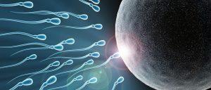 hormoni-plodnost
